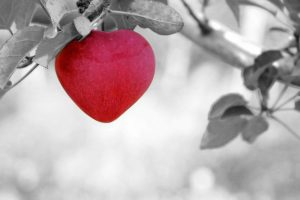 Red apple in the shape of a heart